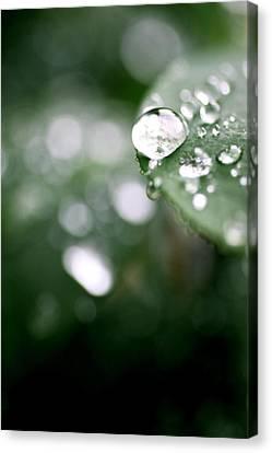 Canvas Print - Summer Rain by AR Annahita