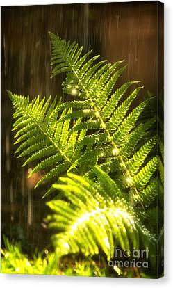 Summer Rain Canvas Print by Jane Rix