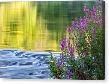 Summer Reflections Canvas Print by Bill Wakeley