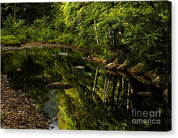 Trout Stream Landscape Canvas Print - Summer Reflections by Thomas R Fletcher