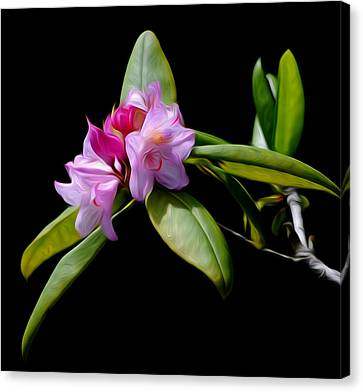 Summer Rhododendron Canvas Print by Timothy Hack