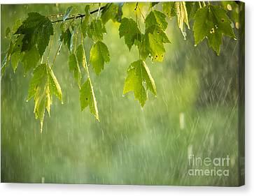Summer Shower Canvas Print by Diane Diederich