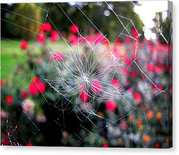 Canvas Print featuring the photograph Summer Snowflake by Greg Simmons