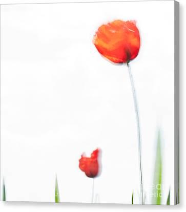 Summer Song Canvas Print by Uma Wirth
