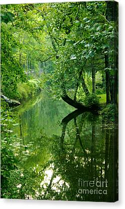 Summer Stream Canvas Print by Melissa Petrey