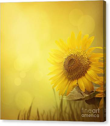 Sun Rays Canvas Print - Summer Sunflower Background by Mythja  Photography