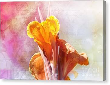 Summer Sunset Canvas Print by Elaine Manley