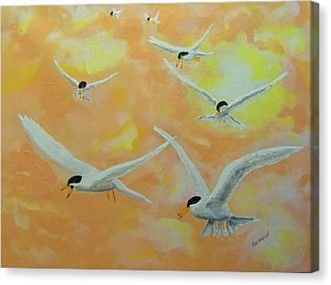 Summer Terns Canvas Print by Rich Mason