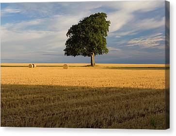 Summer Tree And Stubble Canvas Print