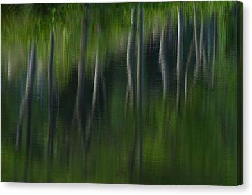 Summer Trees Canvas Print by Karol Livote