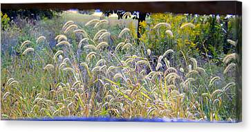Summer Wheat Canvas Print