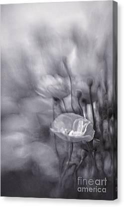 Summer Whispers Iv Canvas Print by Priska Wettstein