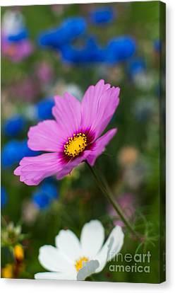 Canvas Print featuring the photograph Summer Wild Blooms by Matt Malloy