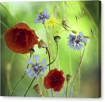 Summer Wildflower Color Canvas Print by Dirk Ercken