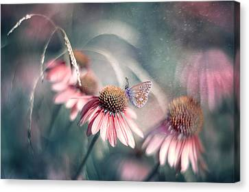 Summer Wonderland Canvas Print by Magda  Bognar