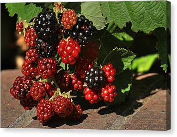 Canon 7d Canvas Print - Summer's Bounty by Donna Kennedy