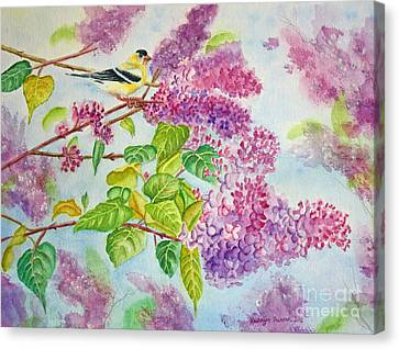 Summertime Arrival II - Goldfinch And Lilacs Canvas Print by Kathryn Duncan