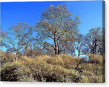 Summertime Oak Trees Canvas Print