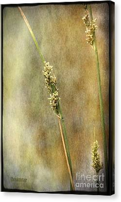 Canvas Print featuring the photograph Summr Grasses V by Chris Armytage
