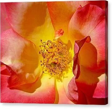 Sun And Flame Canvas Print by Denise Mazzocco