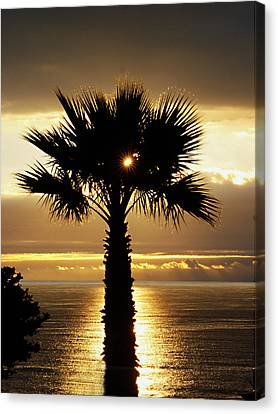 Sun And Palm And Sea Canvas Print