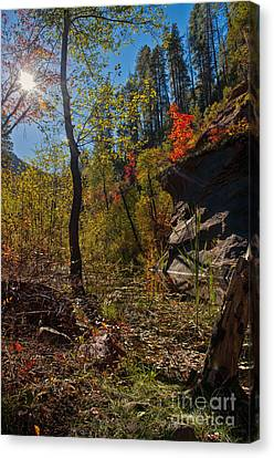 Sun And  The Tree Canvas Print by Brian Lambert