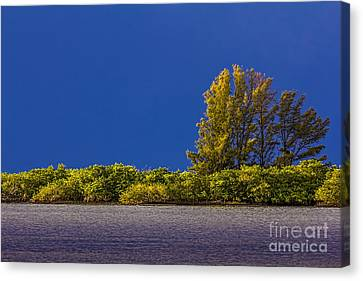 Sun Bathed Canvas Print by Marvin Spates