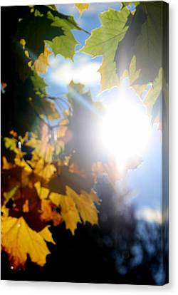 Sun Beam  Canvas Print by Neal Eslinger