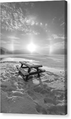 Sun Dog Bw Canvas Print by Rose-Maries Pictures