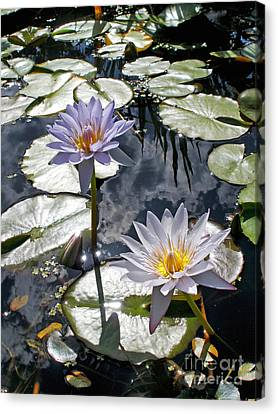 Sun-drenched Lily Pond         Canvas Print by Kaye Menner