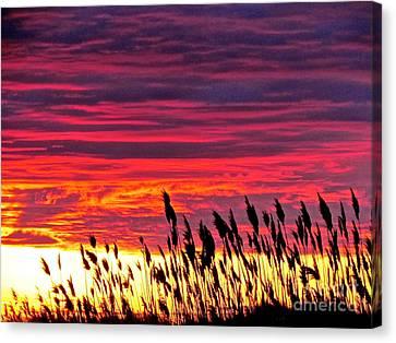 Sun Drifts To Sleep Canvas Print by Q's House of Art ArtandFinePhotography