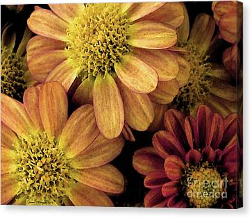 Canvas Print featuring the photograph Sun Fans by Jean OKeeffe Macro Abundance Art