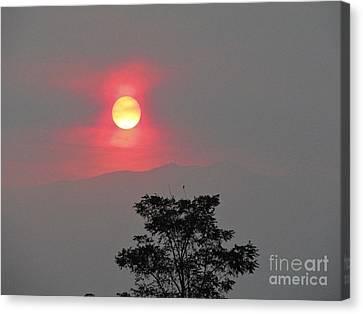 Sun Fire Tree Canvas Print by Phyllis Kaltenbach