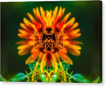 Sun Flower Rising Canvas Print by Omaste Witkowski