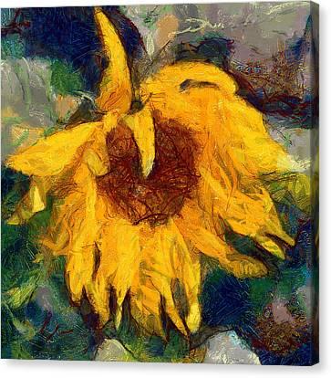 Sun Flowering 6 Canvas Print by Yury Malkov