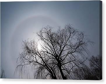 Sun Halo Bare Trees And Silver Gray Winter Sky Canvas Print by Georgia Mizuleva