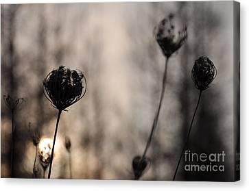 Sun In Darkness Canvas Print