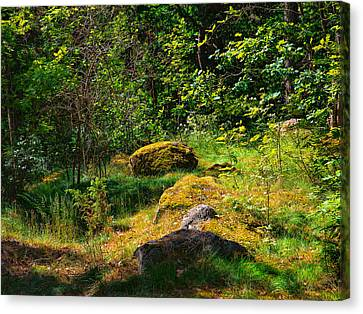 Canvas Print featuring the photograph Sun In The Forest by Leif Sohlman