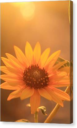 Canvas Print featuring the photograph Sun Kissed by Alicia Knust