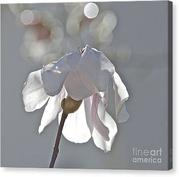 Sun Kissed Magnolia Canvas Print