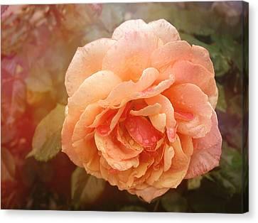 Sun Kissed Rose Canvas Print by Stephanie Hollingsworth