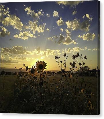 Sun Kissed Canvas Print by Trish Kusal