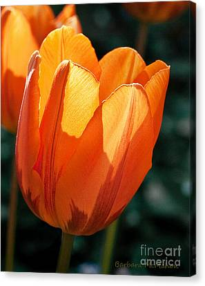Canvas Print featuring the photograph Sun Kissed Tulip by Barbara McMahon