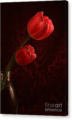 Sun Kissed Tulips Canvas Print by Darren Fisher
