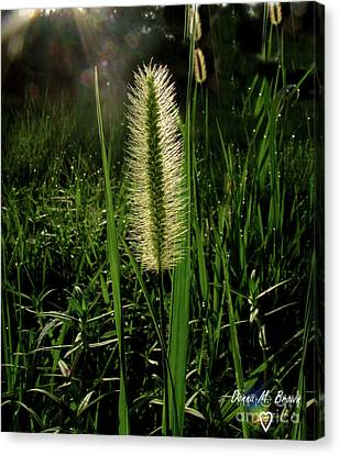 Canvas Print featuring the photograph Sun-lite Grass Seed by Donna Brown