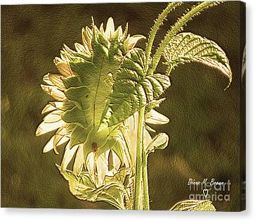 Canvas Print featuring the photograph Sun-lite Sunflowwer by Donna Brown