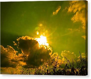 Sun Nest Canvas Print by Nick Kirby