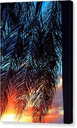 Sun Palm Canvas Print by Laura Fasulo