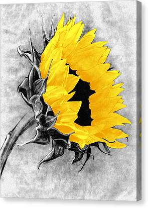 Sun Power Canvas Print by I'ina Van Lawick