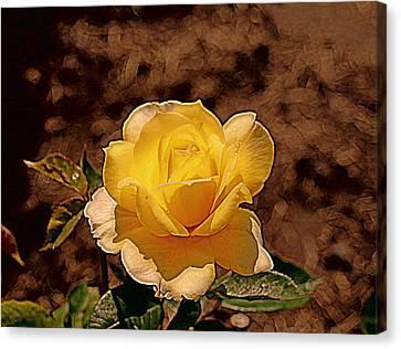 Sun Raes Canvas Print by Victoria Sheldon